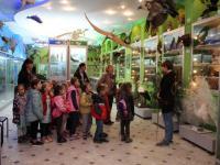 Путешествие в зоологический музей КФУ им. Вернадского
